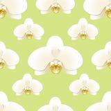 La orquídea blanca florece en un fondo del modelo inconsútil pistacho-coloreado Foto de archivo libre de regalías