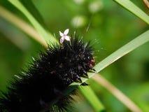 La oruga bonita con una pequeña flor sobre ella es principal imagen de archivo libre de regalías