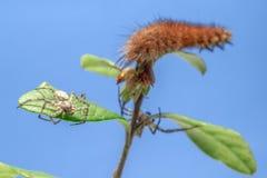 La oruga de la mariposa fotografía de archivo libre de regalías