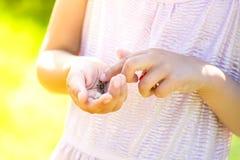 La oruga Orgyia Antiqua, polilla de mechón oxidada o vapourer en el girl& x27; manos de s imagen de archivo libre de regalías
