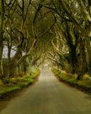 La oscuridad cerca el camino en los funcionamientos de Irlanda del Norte a través de árboles viejos Imagen de archivo