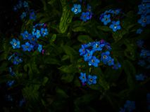 La oscuridad me olvida no Fotografía de archivo