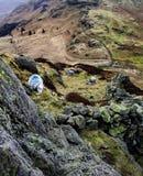 La oveja de Herdwick en derriba Imágenes de archivo libres de regalías