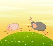 la oveja del amor persigue después de otra Imagen de archivo libre de regalías