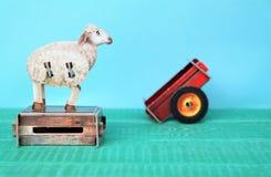 La oveja se está colocando en un pecho Foto de archivo