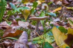La période des champignons est ici image libre de droits