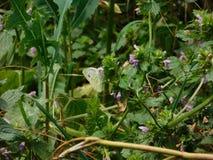 La période du papillon Photographie stock libre de droits