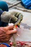La pêche est le moyen de subsistance des gens du pays images libres de droits