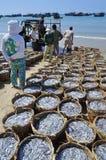 La pêche est située sur la plage dans beaucoup de paniers attendant le chargement sur le camion à l'installation de transformatio Photos libres de droits