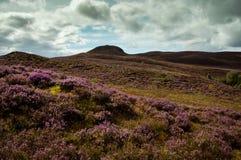 La púrpura amarra Imágenes de archivo libres de regalías