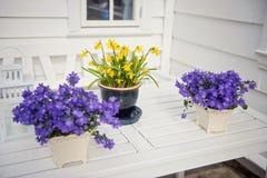 La púrpura delicada florece la verbena en la tabla afuera Foto de archivo