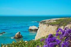 La púrpura florece el acantilado del océano Imágenes de archivo libres de regalías