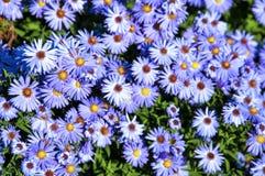 La púrpura florece el fondo Fotografía de archivo libre de regalías