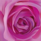 La púrpura hermosa del centro subió El extracto se levant? Cierre de la rosa de la p?rpura para arriba Flor hermosa rosa realista libre illustration