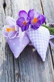 La púrpura oye fotografía de archivo