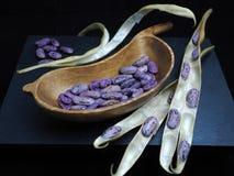 La púrpura secó las habas de corredor y las vainas con una haba formaron el cuenco Fotografía de archivo libre de regalías