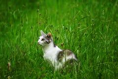 La paciencia de un gato que espera Imagen de archivo libre de regalías