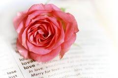 La page romantique de cru avec le rose s'est levée Photographie stock