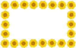 La pagina del girasole fiorisce su fondo bianco isolato Vista franco Fotografia Stock Libera da Diritti