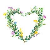 La pagina di cuore di un eucalyptus si ramifica e fiori selvaggi ed erbe Immagini Stock Libere da Diritti