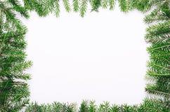 La pagina di giovane albero di Natale spinoso verde si ramifica su fondo bianco Copi lo spazio, vista superiore immagini stock libere da diritti