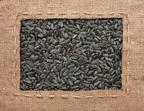 La pagina fatta di tela da imballaggio con la linea si trova sui semi di girasole Fotografie Stock