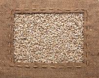 La pagina fatta di tela da imballaggio con la linea si trova sui semi di girasole Fotografia Stock