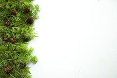 La pagina, fondo con l'albero di Natale si ramifica e coni Fotografia Stock Libera da Diritti