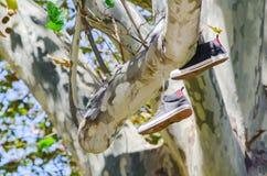 La paire d'espadrilles noires de cheville chausse accrocher haut en haut sur un grand arbre Photos libres de droits