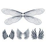 La paix naturelle de plume d'isolement par ailes de pignon d'oiseau de vol animal de liberté conçoivent l'illustration de vecteur Image libre de droits