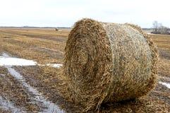 La paja se fue en el campo después de la cosecha de grano, la formación de los rollos densos para el uso como combustible, la pro Foto de archivo libre de regalías