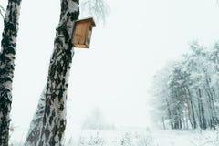 La pajarera está colgando en el abedul cubierto con nieve El cuento de hadas del invierno en el bosque Fotografía de archivo