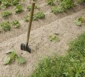 La pala se pega en la tierra en jardín Foto de archivo