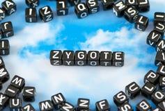 La palabra Zygote Imagenes de archivo