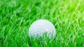 La palla da golf bianca è su erba Fotografia Stock Libera da Diritti