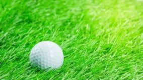 La palla da golf bianca è su erba Fotografia Stock