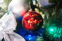 La palla rossa sul primo piano dell'albero di Natale si ramifica e la riflessione Immagine Stock