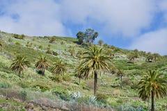 La Palma Photographie stock