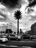 La palma artificiale Sguardo artistico in bianco e nero Fotografie Stock
