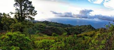 La Palma, Caldera Taburiente royaltyfri bild