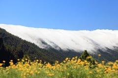 La Palma, Canary Islands Royalty Free Stock Photos