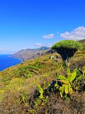 La Palma, Canary Islands Royalty Free Stock Photos