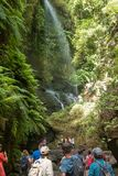 `LA PALMA, CANARY ISLANDS, SPAIN - AUGUST 13TH 2017: people admiring the waterfall of the forest of Los Tilos, Biosphere Reserve. On the island of La Palma stock image