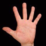 La palma con cinco fingeres fotografía de archivo libre de regalías