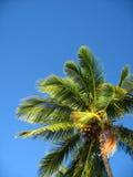 La palma contra un cielo azul Imagen de archivo libre de regalías