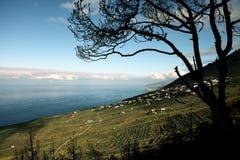 La Palma d'île Photos stock