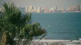 La palma d'ondeggiamento va contro le onde del mare e l'orizzonte costiero della città video d archivio
