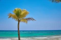 La palma de coco sola crece en una playa tropical Agua de la turquesa del mar del Caribe Maya México de Riviera fotos de archivo
