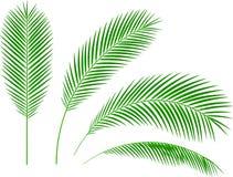 La palma de la impresión ramifica el ejemplo blanco del vector del fondo ilustración del vector