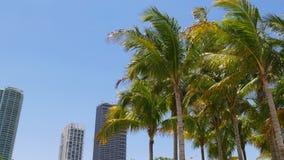 La palma del centro di Miami del giorno di estate completa la vista 4k S.U.A. delle costruzioni di appartamento video d archivio